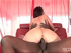 포르노: 다른인종간 섹스, 구강섹스, 음모제거, 포르노스타