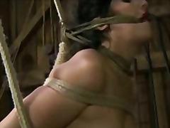 Porno: Hardkorë, Fetish, Sllave, Skllavizëm